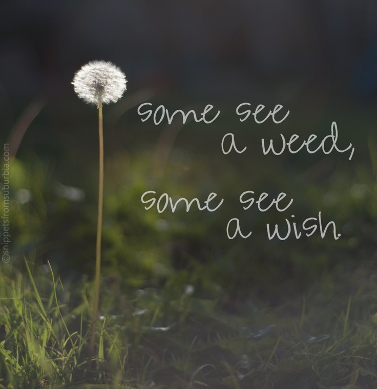 Do you See a Weed or a Wish? | The Happsters
