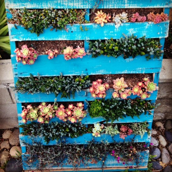 Succulent Pallet Garden