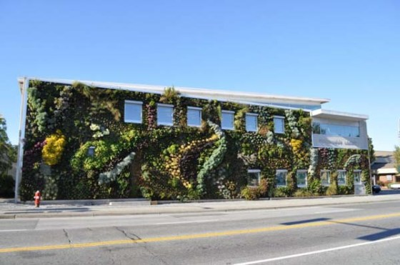 Largest vertical garden